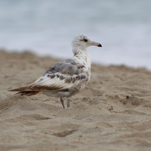Fred the Seagull