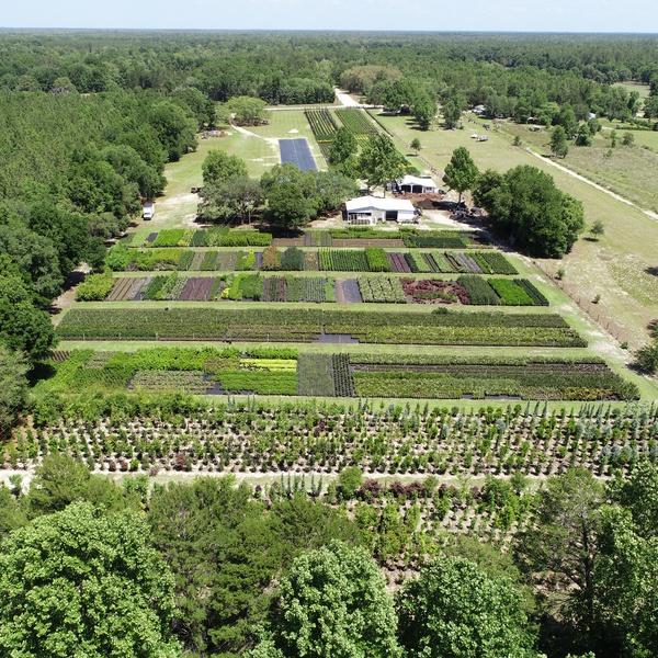 Landscape Nursery in Levy County