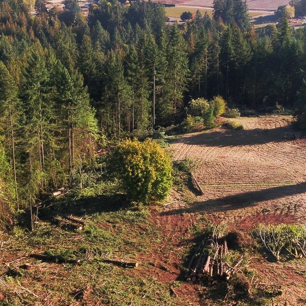 Suburban Logging and Clearing
