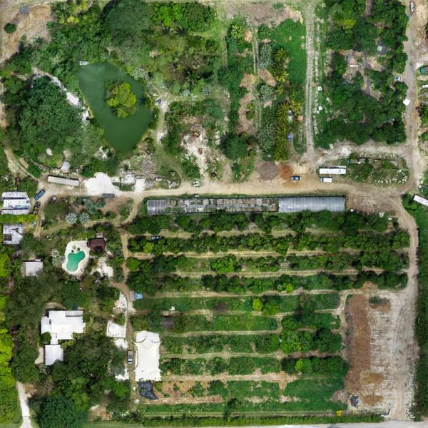 HOMESTEAD, FL JACKFRUIT FARM