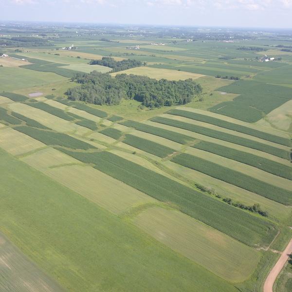 Corn and Oat Farm Field