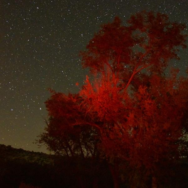 Nighttime Low Light Landscape