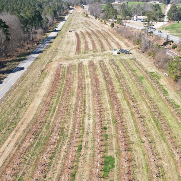 Georgia Peach Farm - February 2021