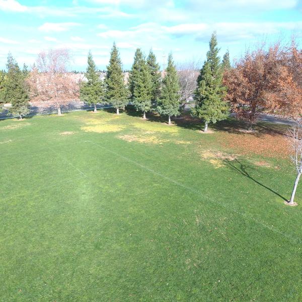 Trees @ 40 ft