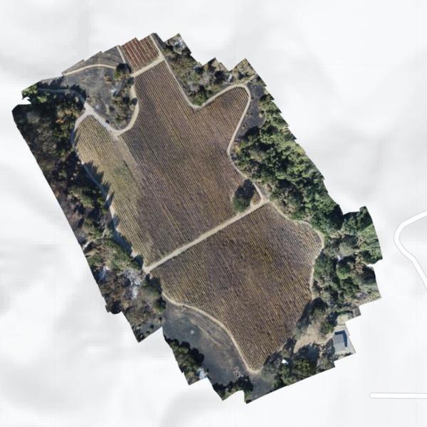 Vineyard Fire Damage Assessment