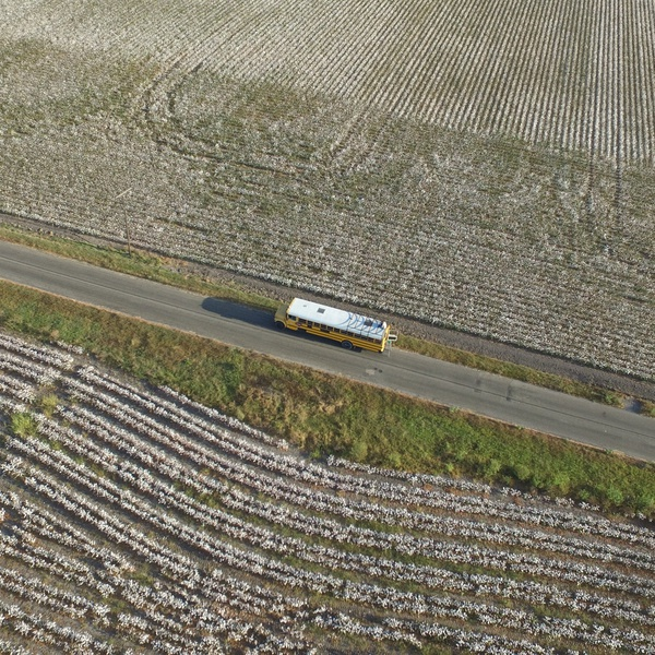 Bus in a Cotton Field