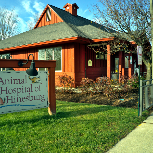 Animal Hospital 2
