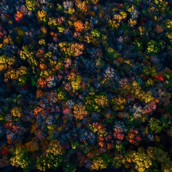 Cravens Fall Aerial