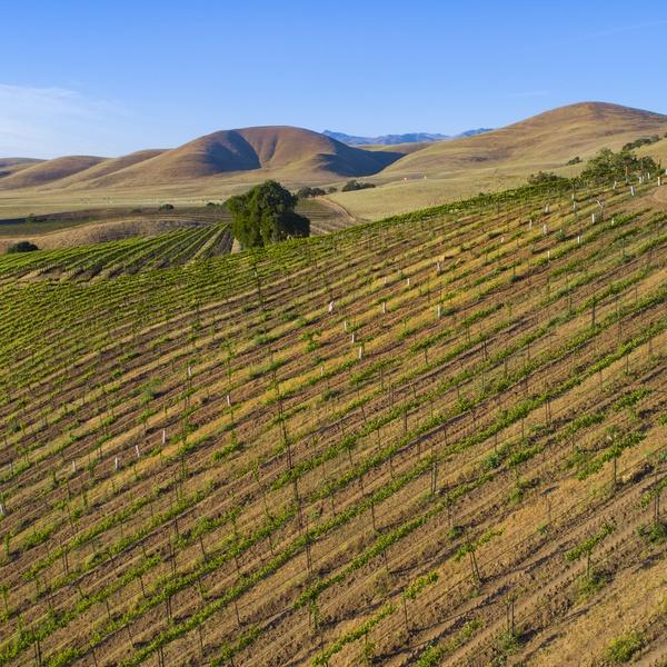 Siletto Family Vineyards