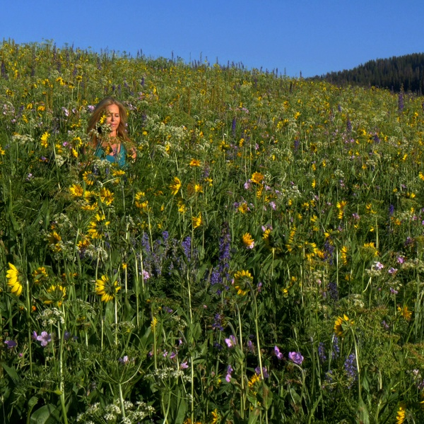 Wildflowers Drone